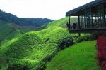 rp_15-Places-Must-Explore-When-You-Visit-Cameron-Highlands-1-500x243.jpg