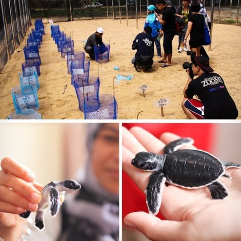 Turtle Sanctuary Hatchlings Program