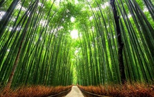 14 Amazing Magical Tree Tunnels You Should Take A Walk Through