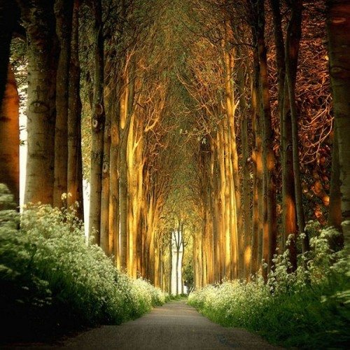 Incredible tree tunnel in the Netherlands