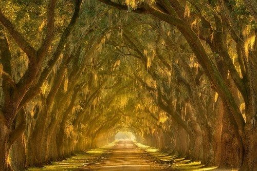 amazing tree tunnels Oak Alley along the Mississippi River outside New Orleans Louisiana