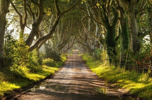 amazing tree tunnels The Dark Hedges in Northern Ireland
