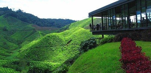 15 Places Must Explore When You Visit Cameron Highlands