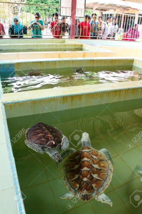 Segari Pasir Panjang Turtle Hatchery Center