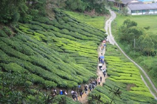 Cameron Highlands List Of Best Places To Visit