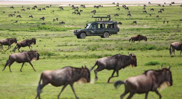 Your Information To The Nice Wildebeest Migration In Africa
